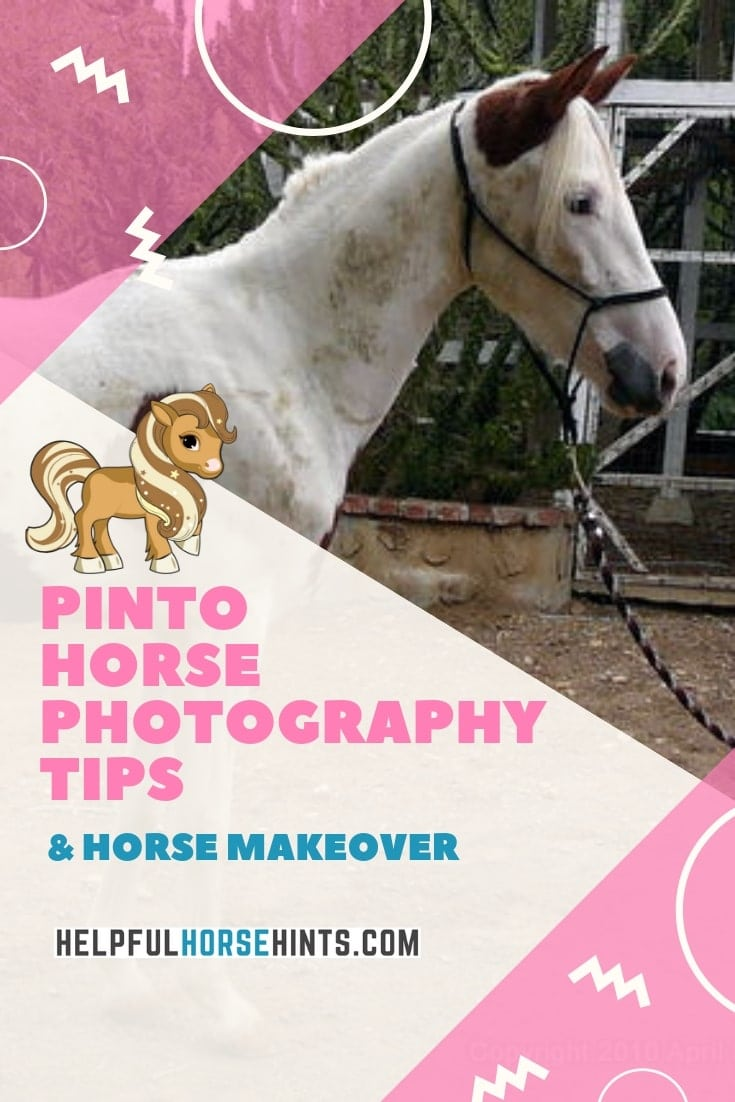 creative horse photography tips