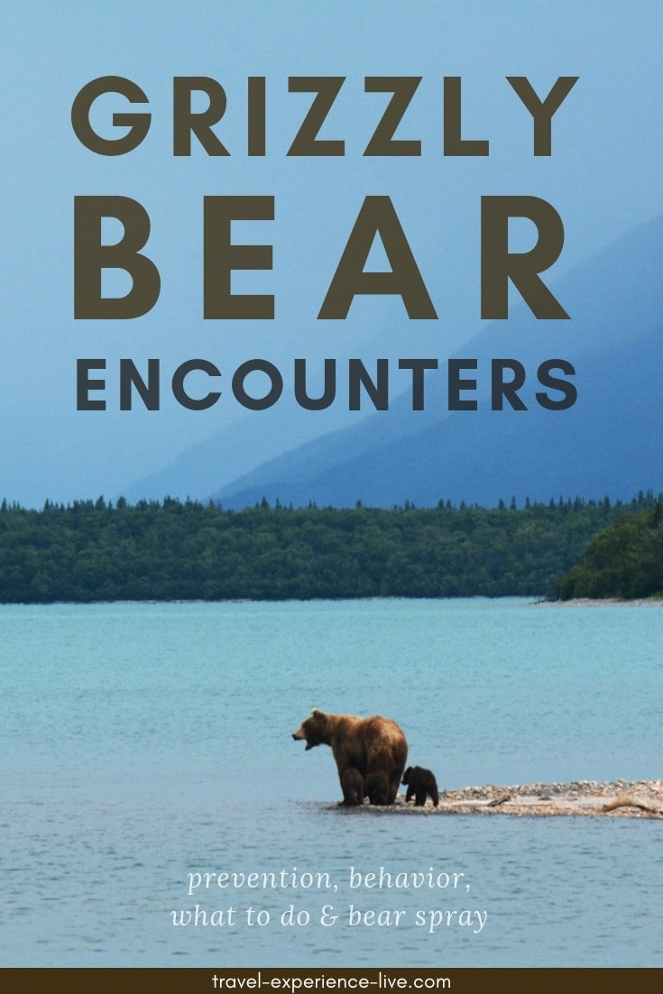 59a4d20e Grizzly Bear Encounter: Avoiding & What To Do - Travel. Experience ...