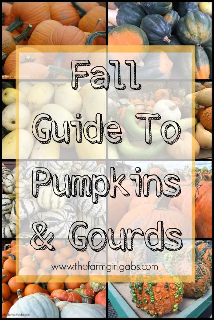 So many gourds, so many pumpkins. This Fall Guide To Pumpkins & Gourds describes some of the more popular varities.