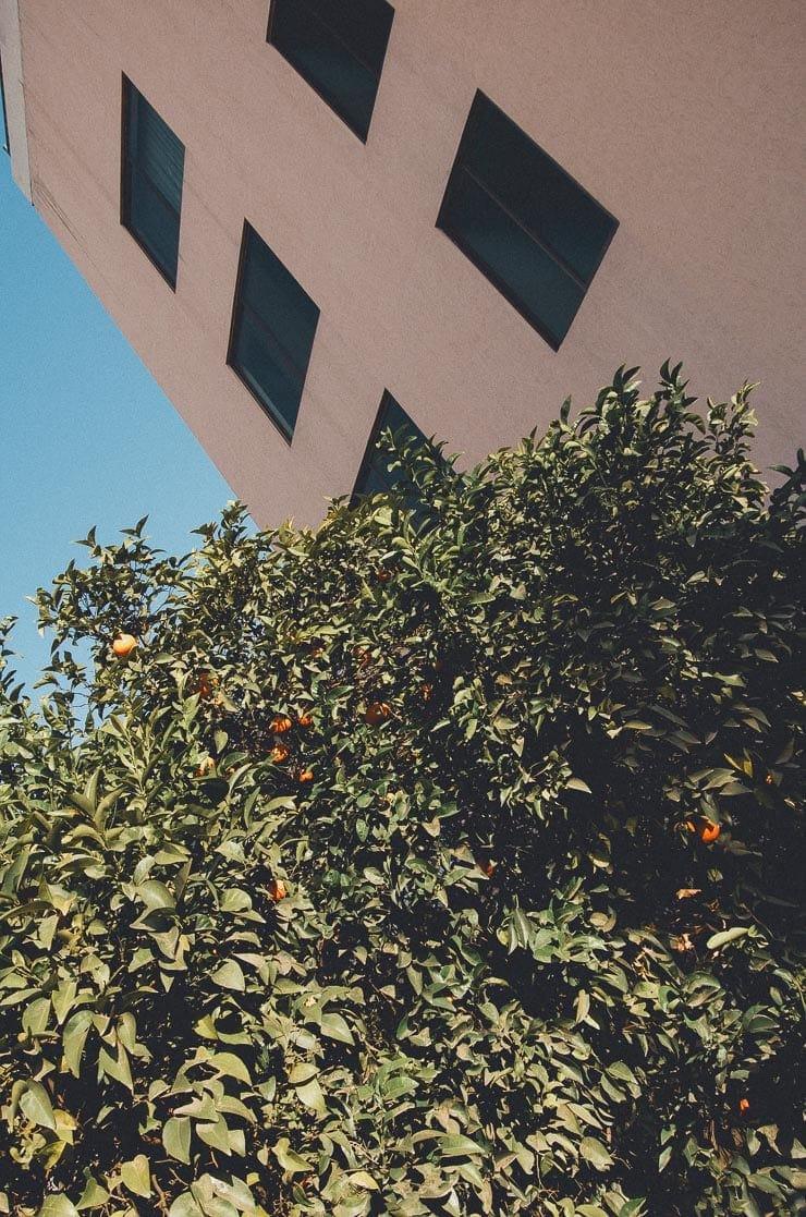 Et at vores appelsintræer fra haven. Appelsiner skal være helt rigtige før jeg kan lide dem og disse var altid super lækre.