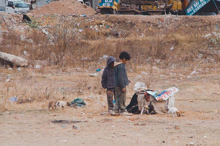 Nogle fattige børn har bygget et hjem til en hundefamilie.