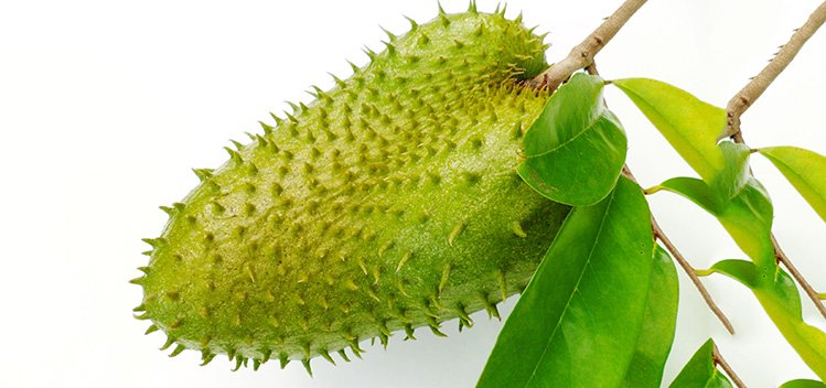 This One Fruit Kills Malignant Cells of 12 Different Types of Cancer