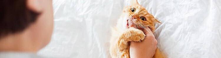 best cat litter brand review tinpaw