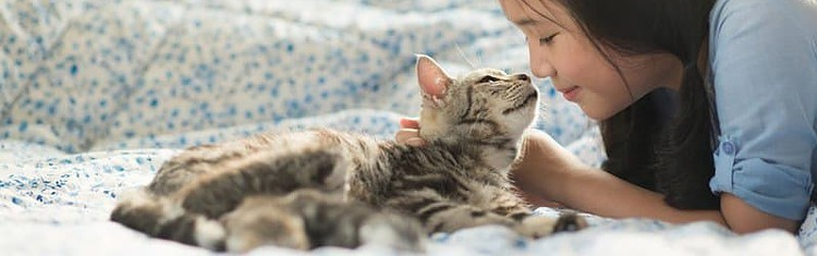 Which Best Food For Diabetic Cat