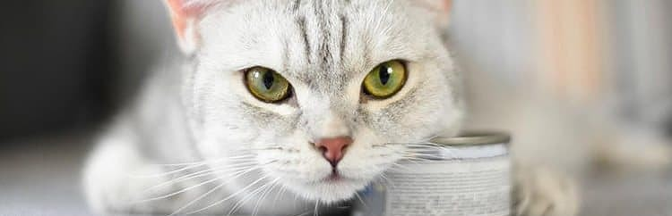 Low Carb Cat Food bottom line