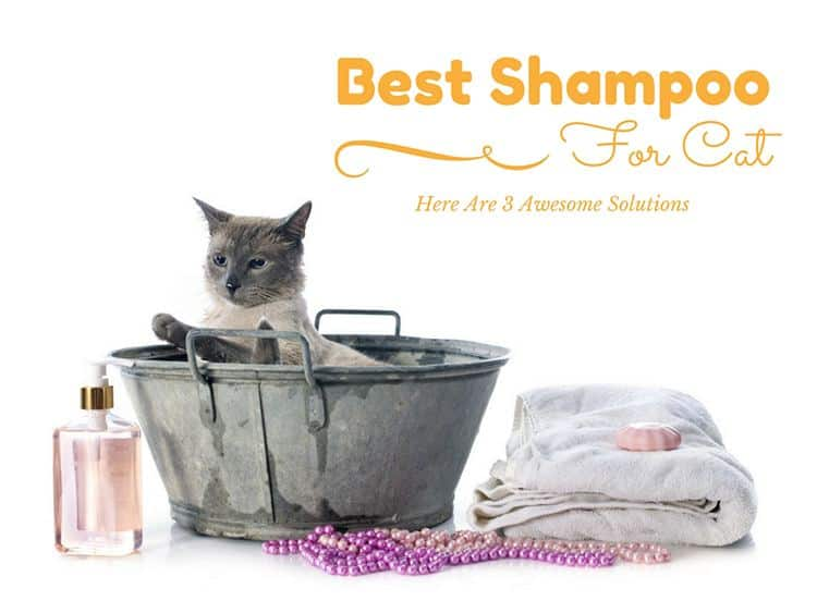 Best Shampoo For Cats