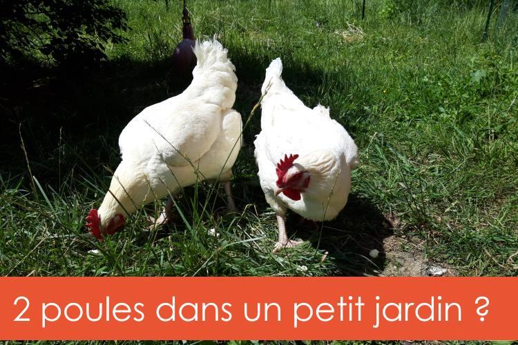 2-poules-petit-jardin