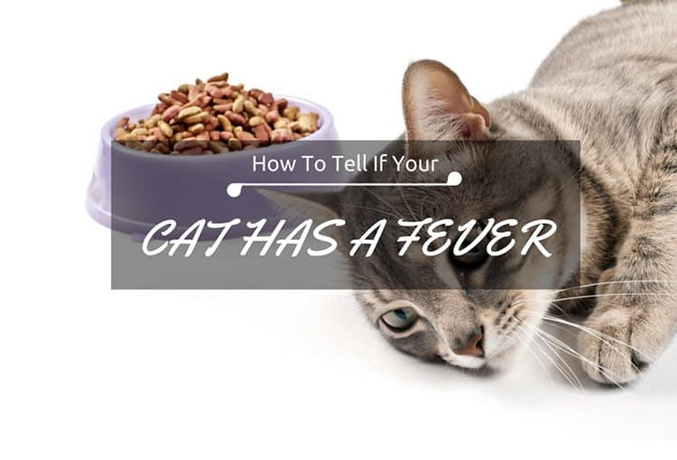 How To Tell If A Cat Has A Fever And Is Terribly Sick