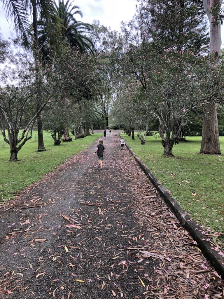 Sandy Creek Track Walk Cooranbong