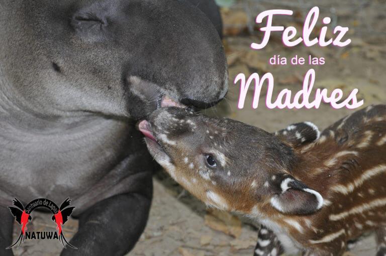 Feliz día de las madres!!