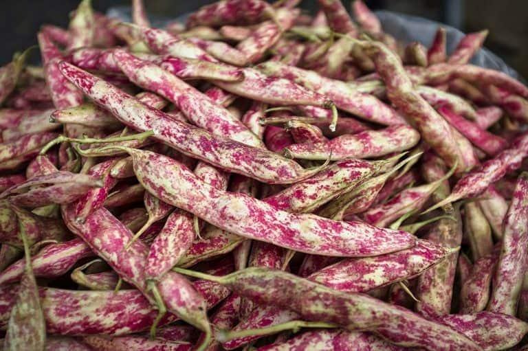 coltivare pianta fagioli