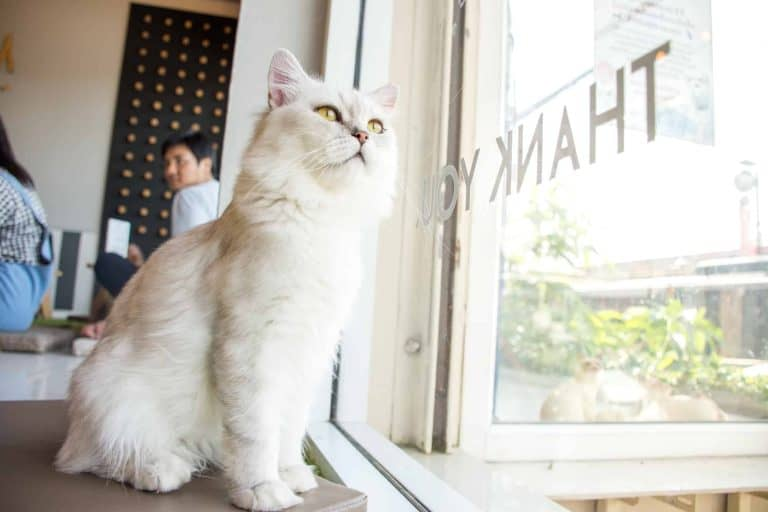 Kitty Cantina: Spokane's First Cat Cafe [Updated for 2021]