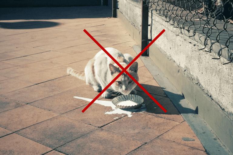 cats should not drink milk