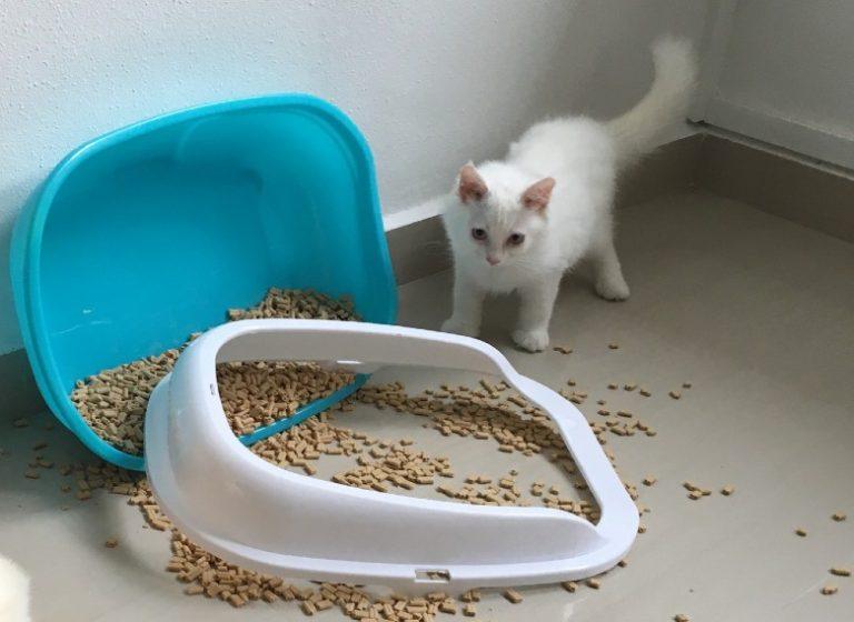 cat throwing litter on the floor