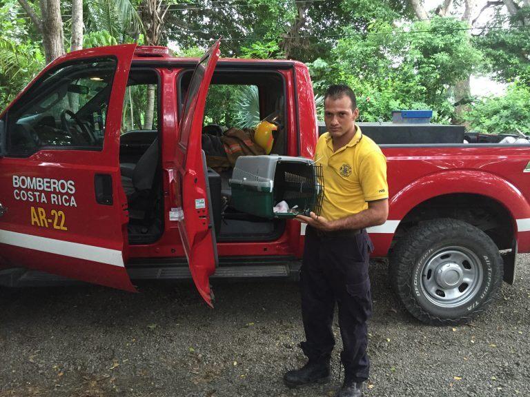 Cuerpo de Bomberos rescatan ardilla (<em>Sciurus variegatoides</em>).