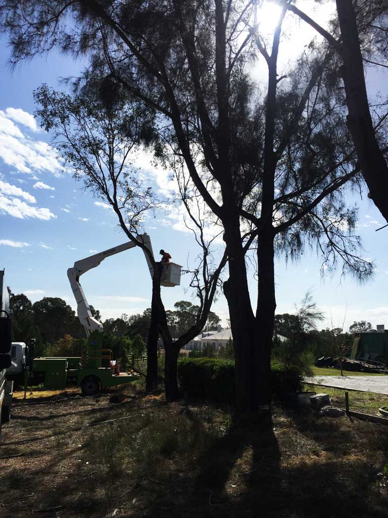 Mulgoa Tree Clearing