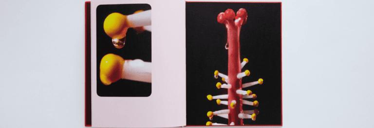 «Pornosynthesis»: la metamorfosi del corpo in fiore