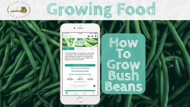 Bush Beans blog post