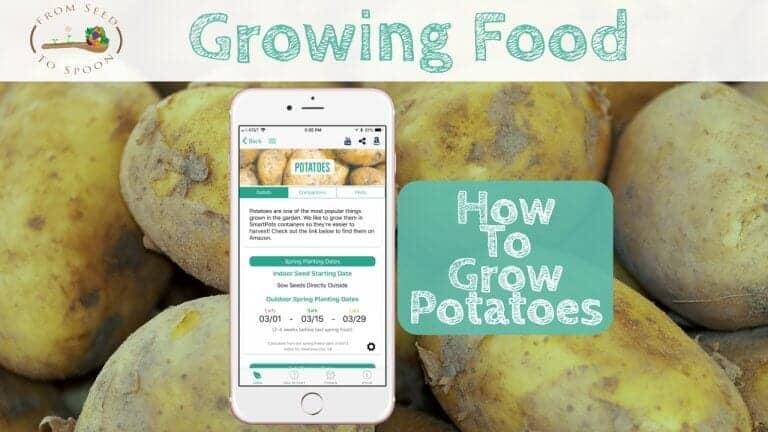 Potatoes blog post