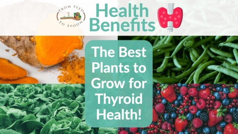 Thyroid blog post