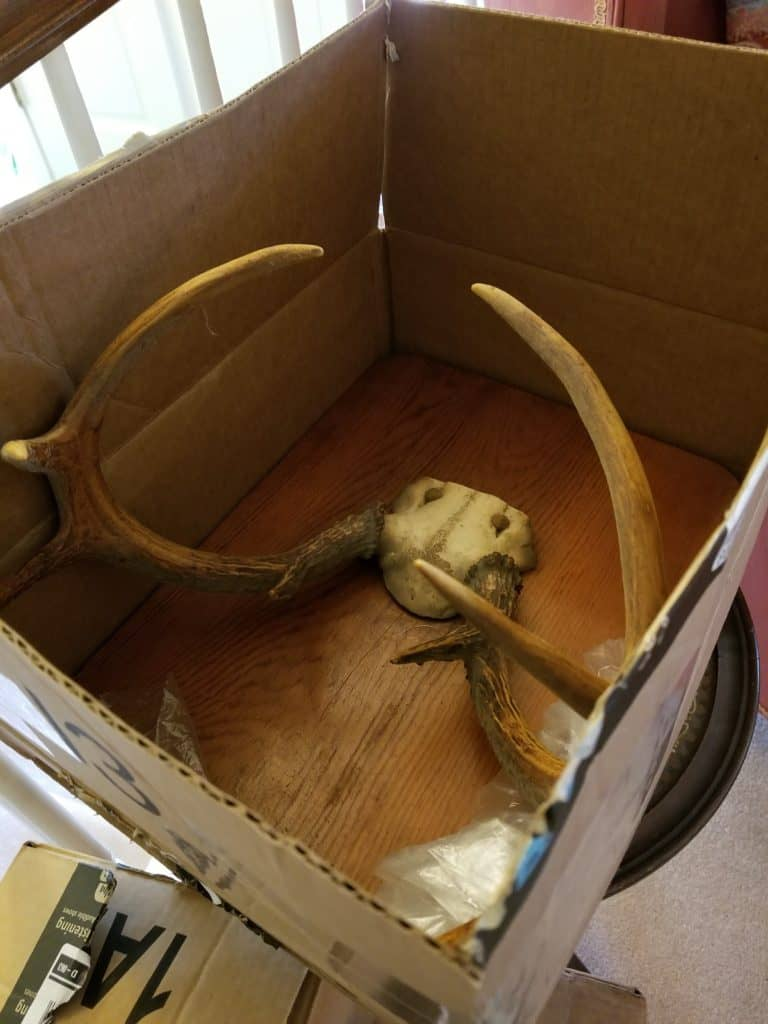Decorating with antlers, deer antlers as decor