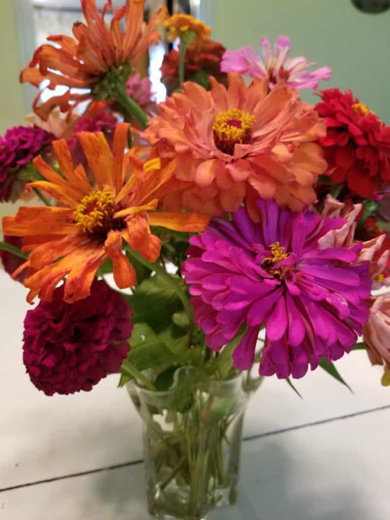 Planting a Cutting Garden, Zinnias, growing flowers from seeds