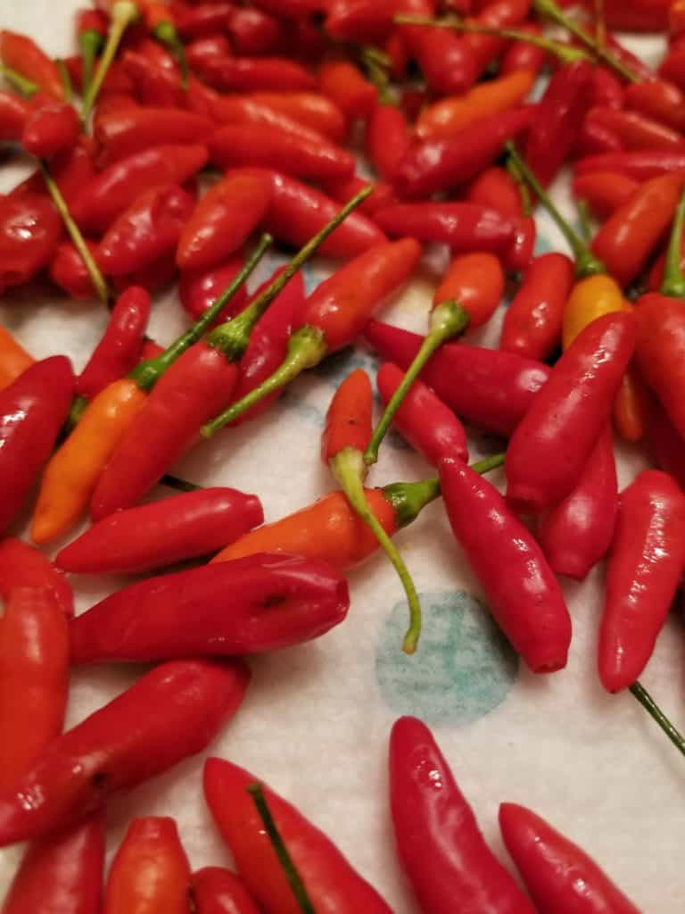How to make Pepper Vinegar with Tabasco Peppers