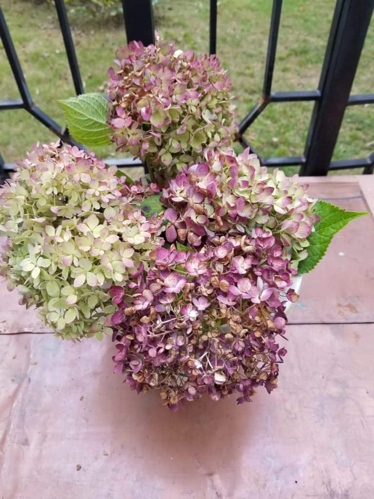 Absolute Easiest Way to Dry Hydrangeas