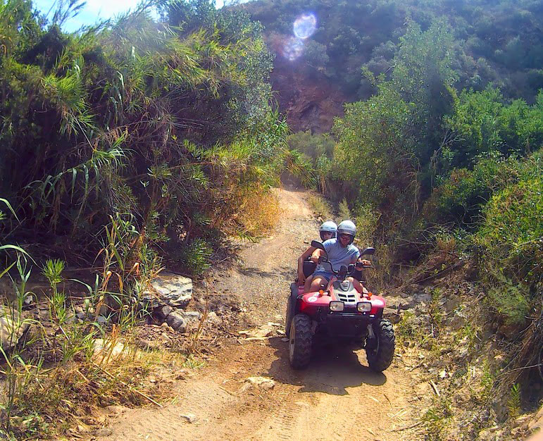a quad is riding on a terrain amongst beautiful trees