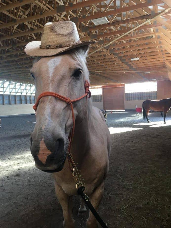 happy horseback riding