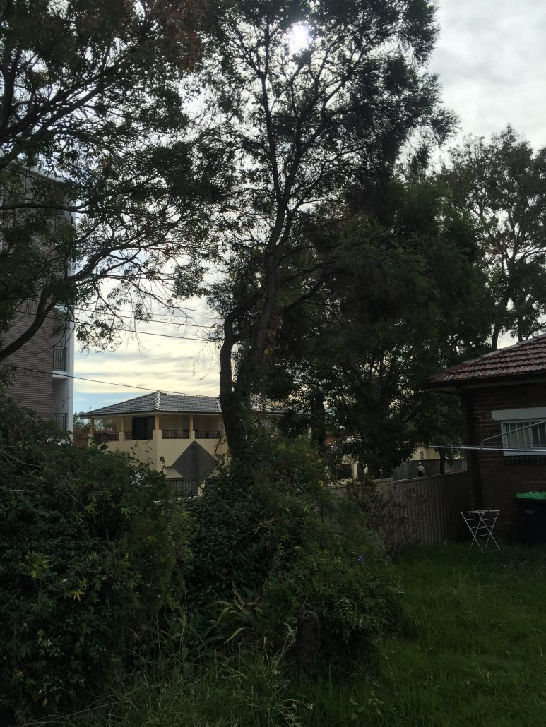 Tree removal in Strathfield