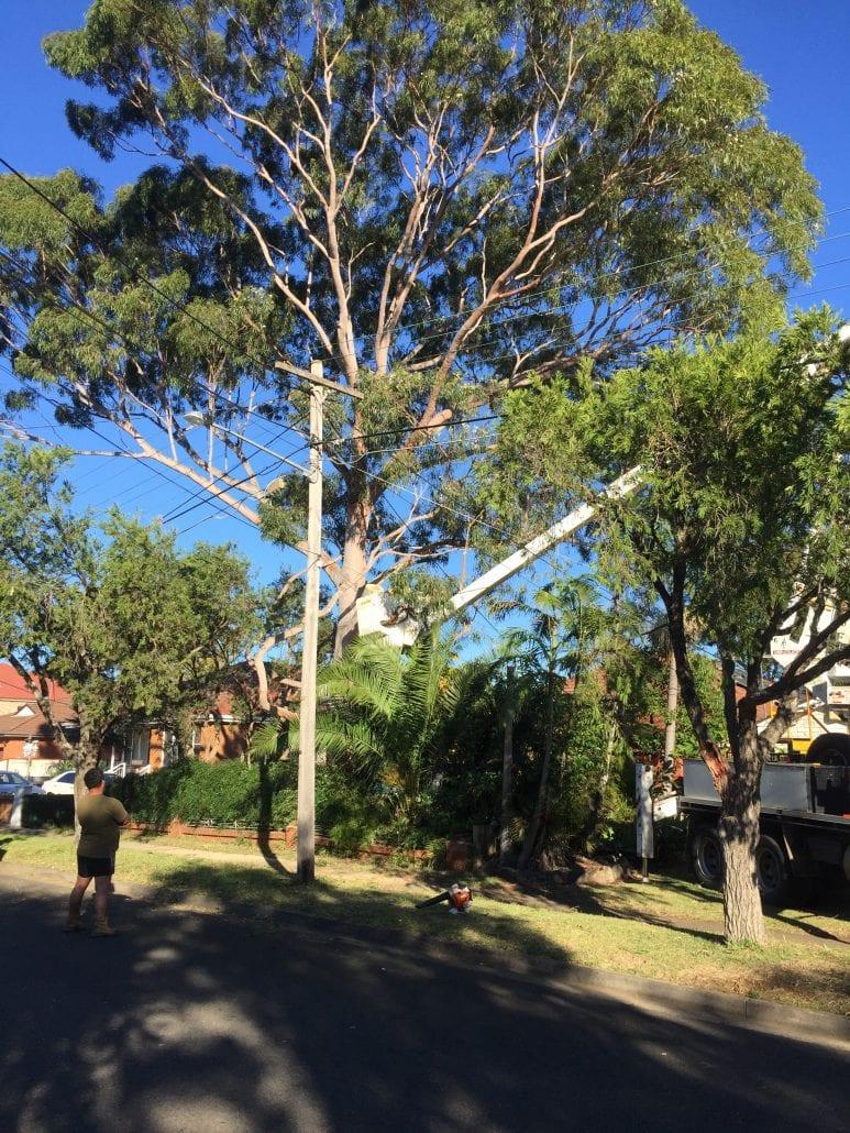 Tree limb removal near power lines
