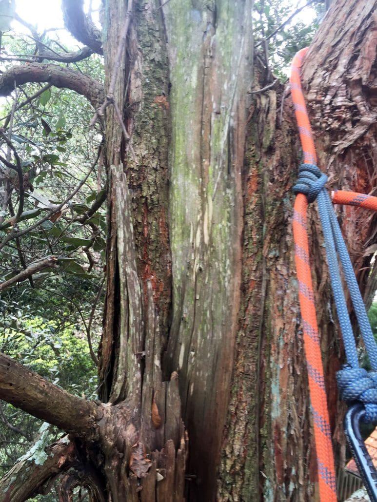 tree-assessment