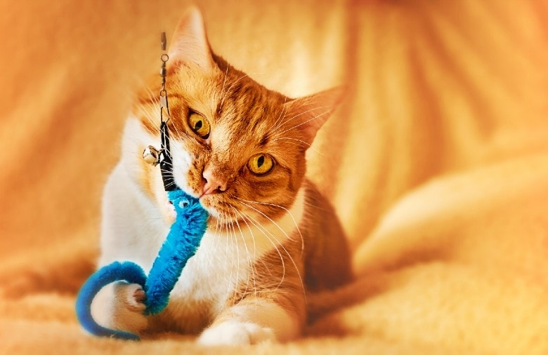 image of a cat playing with a kitten teething toy