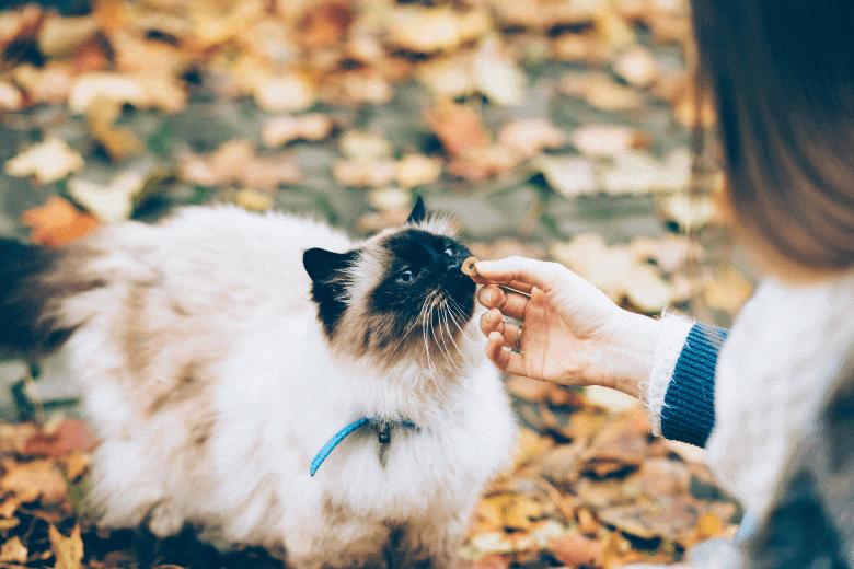 Cat treat
