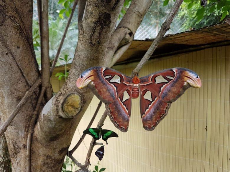 Papiliorama Kerzes