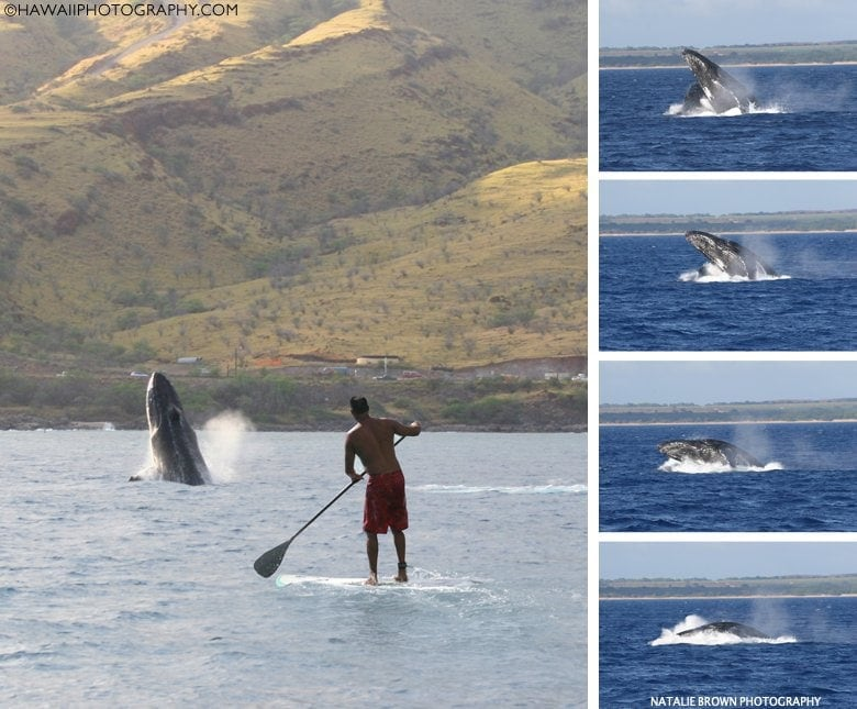 Maui whale watching photos