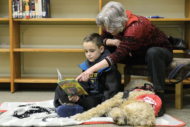 Goldendoodle working dog therapy animal at hospitals schools air force bases