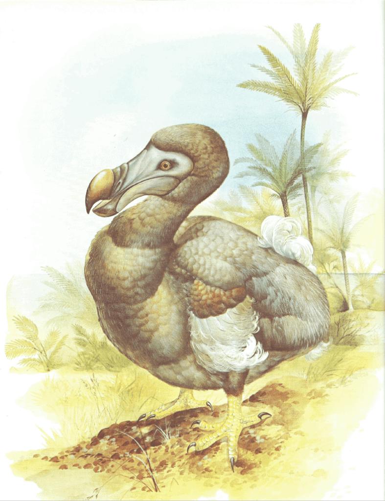 the mighty dodo