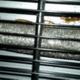 Plaga de cucarachas restaurante en Sevilla
