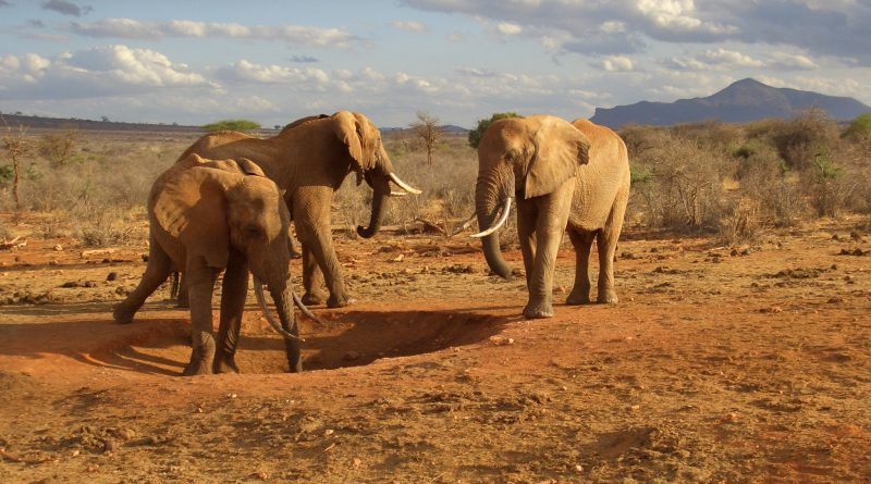 Elephants, the only animals having burial ritual