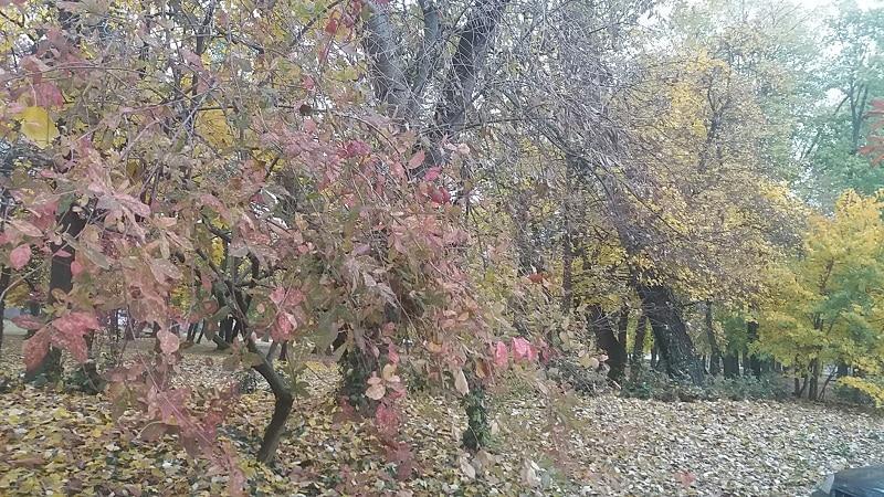 Őszi park, lombhullatás, gyönyörű színpompa