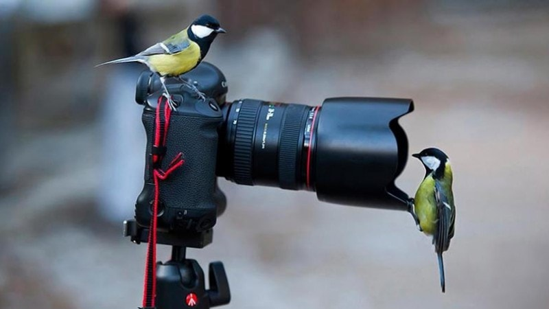 Birds with camera