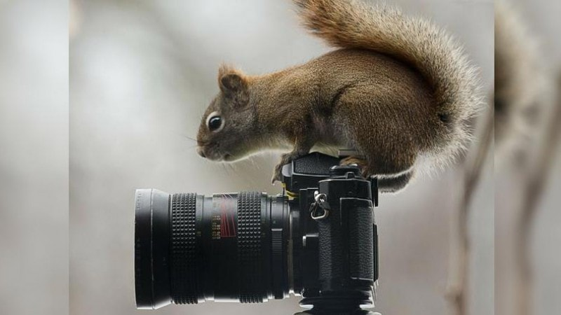 Squirrel on camera