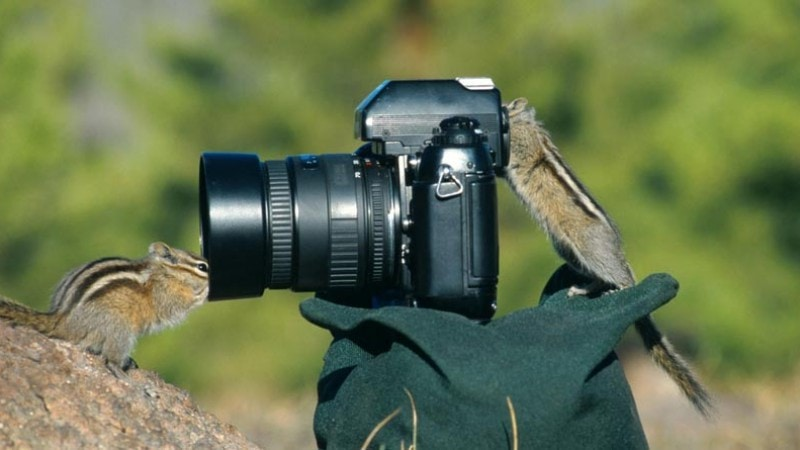 Chipmunks  with camera