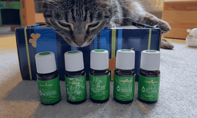 Xoco die Katze schnuppert an AnimalScents - naturreine ätherische Öle für Tiere