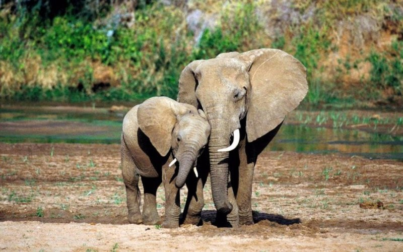Mom and baby elephants