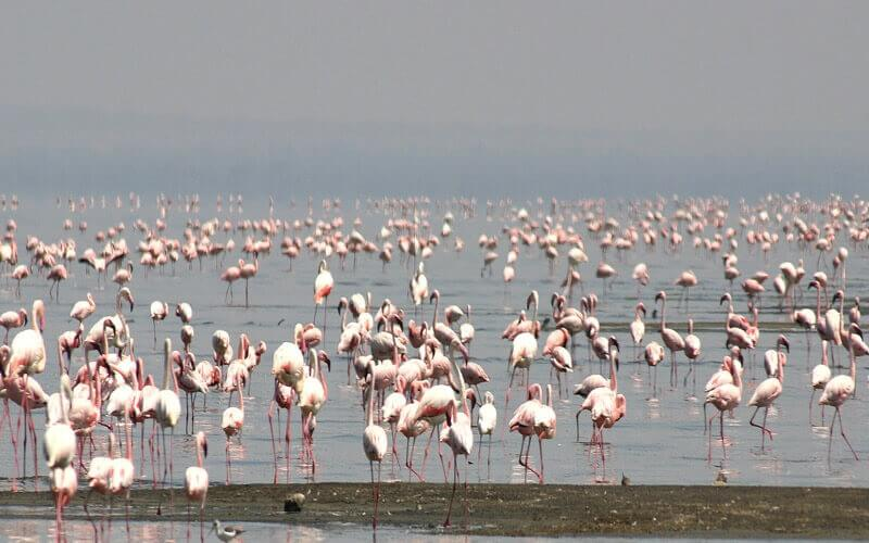 Abijata-Shalla  Lakes National Park