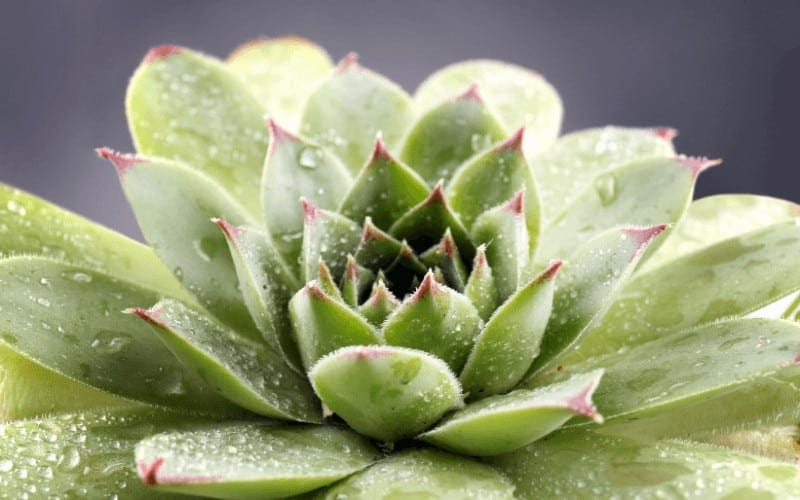 How To Know Your Succulent is Underwatered