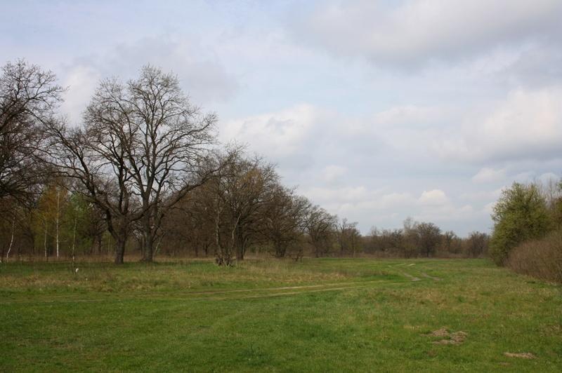 Огляд Kyiv Trail і 9 моїх помилок через які все пішло не так 2